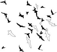 wootbirds
