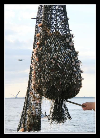 Shrimping 27